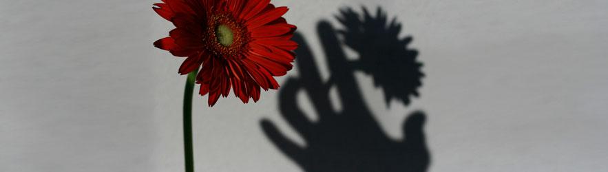 Fiore e Ombre - cc mbd.marco