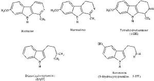 Figura 4. Struttura chimica della Serotonina e dei principali alcaloidi presenti in Psychotria viridis (Dimetiltriptamina -DMT-) e in Banisteriopsis caapi (Armina, Armalina, Tetraidroarmina –THH-). Immagine tratta da Callaway et al., 1999.