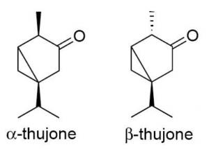 Struttura Chimica dell'α e β-tujone, principali componenti dell'Artemisia absinthium L.